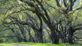 Rancho Canada Del Oro Open Space Preserve - 03/27/20