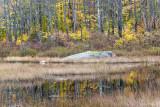 Backwoods Beaver Pond III