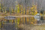 Backwoods Beaver Pond II