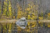 Backwoods Beaver Pond