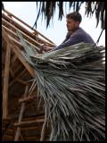Palm leaf roof under construction