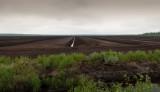 Kartivuoma Swedens biggest peat moss