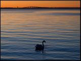 Ottenby & Southern Öland - People, Wildlife and Landscape