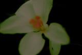 bloom — magnolia