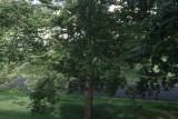 IMG_8095.JPG_Tree