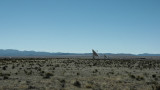 NRAO Very Large Array (VLA)