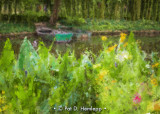 Boats and flowers