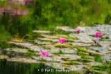 Monet's lilies