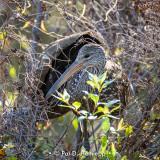 On their nest