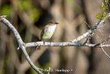 Quiet perch