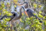 Stick for nest