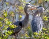 Grabbing the beak