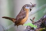 Full beak