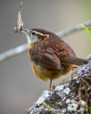 Twig for nest