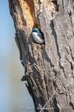 Swallow in tree