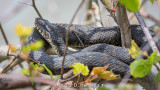 Snake and leaves