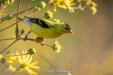 Finch and flowers