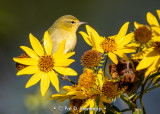 Warbler and flowers