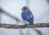 Bluebird against sky