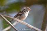 Sparrow in open