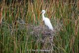 On its nest
