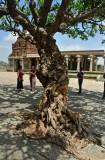 Vittala Temple complex - India-1-9605