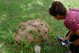 Ants and Entomologist - India-1-9650