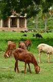Vittala Temple complex - India-1-9658