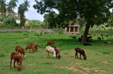 Vittala Temple complex - India-1-9659