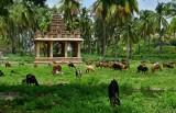 Vittala Temple complex - India-1-9661
