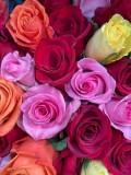 03 Roses i2875