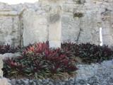Plants growing among the ruins