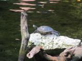 Turtle warming up