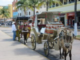 Horse and carriage ride, anyone?