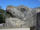 Serpent head