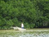 Fishing near the mangroves
