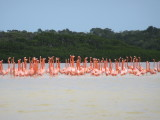The star attraction - flamingos