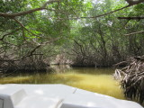 Into a mangrove tunnel