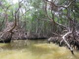 Looking for crocodiles