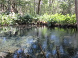 Freshwater spring wells into the saltwater