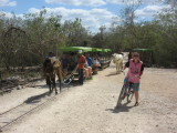 Sit on a horse-drawn 'truck' or cycle to the cenotes - we cycle