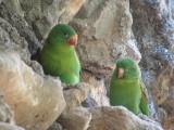 Wee green birds