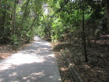 Paths through the forest to see the animals