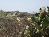 Cactus and ruins