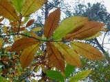 Vert et roux-3315D.jpg