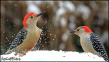Birds, Birds, and more birds!