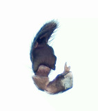 Salticidae palpe