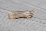 Cucullia chamomillae ( Kamomillkapuschongfly )