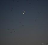 sony-fe-200-600mm-g-oss-moon-luna_03.JPG