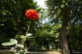sony-e-16-55-g-f2.8-review-bokeh_02.JPG